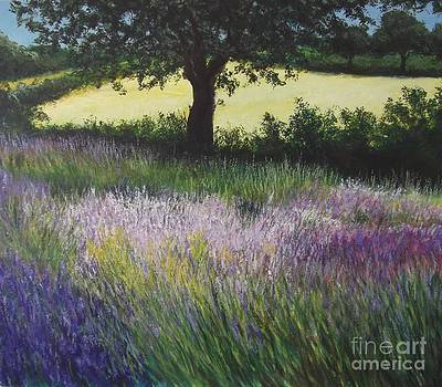 Fields of Lavendar by Lizzy Forrester