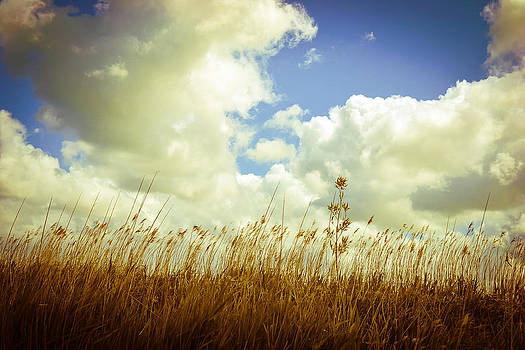 Fields of Summer by Ruth MacLeod