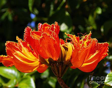 Fiery Petals by Patricia Griffin Brett