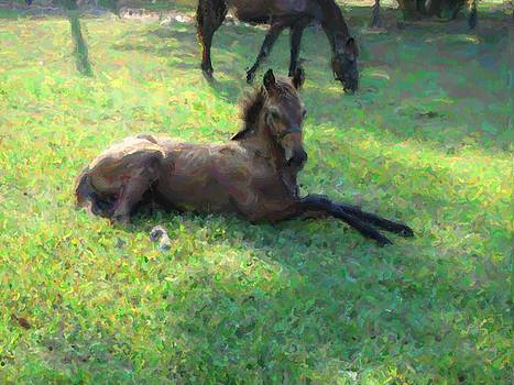 Terry Sita - Filly at rest