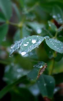 Amee Cave - Finally Rain
