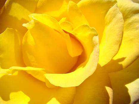 Baslee Troutman - Fine Art Prints Yellow Rose Flower