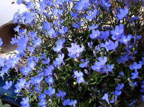 Fiorellini Blu by Ob Noba