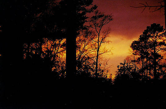 Fire Sky by David Campbell
