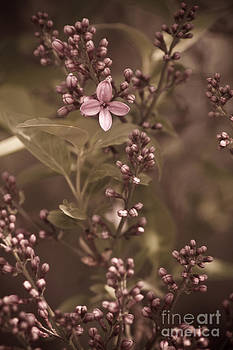 First Bloom by Rebbecca Romine