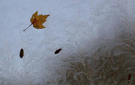 Annie Babineau - first fall frost