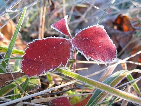 Leontine Vandermeer - First frost
