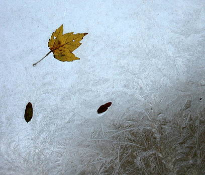 Anne Babineau - first frost of fall
