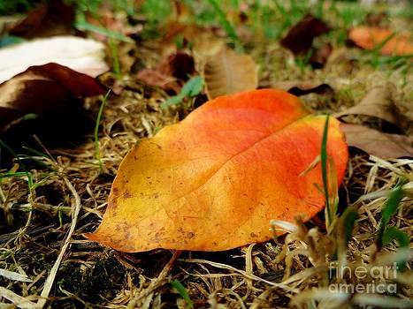 First Of Fall by Elizabeth Hernandez