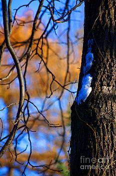 First Snow by Valerie Hesslink