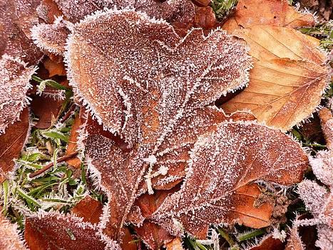 First Winter Breath by Sasha  Grebenyuk