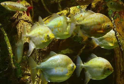 Tammy Bullard - Fish Dance