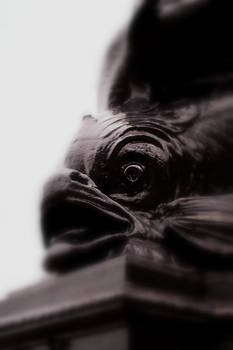 Fish Eye by Jacqui Collett