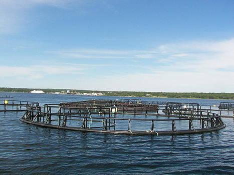 Daryl Macintyre - Fish Farming