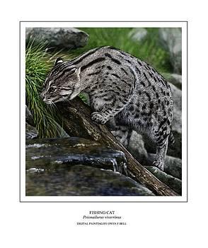 Fishing Cat by Owen Bell