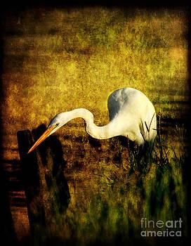 Fishing by Joan McCool