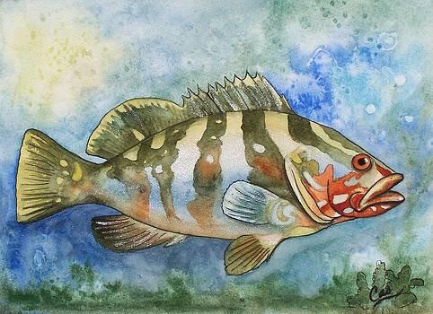 Fishy Fishy by Karen Casciani