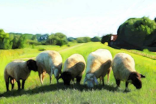 Steve K - Five Sheep