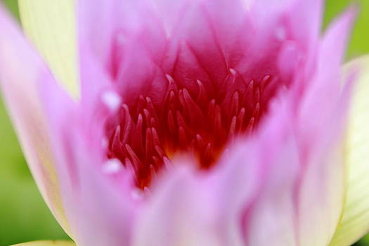 Flame like lotus petals. by Pitakpong Chansri