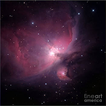 Flame Nebula by Bill Frische