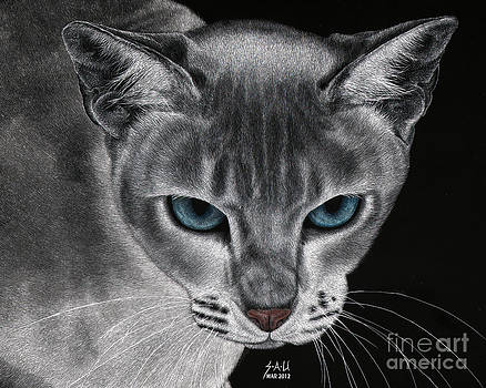 Flame Point Siemese Cat by Sheryl Unwin