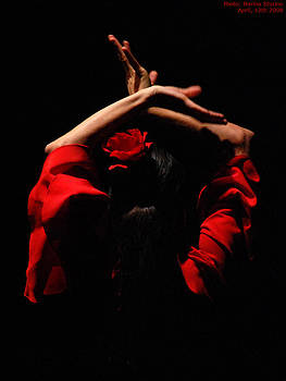 Flamenco by Marina Sturino