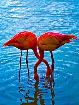 Jeff Adkins - Flamingo Love