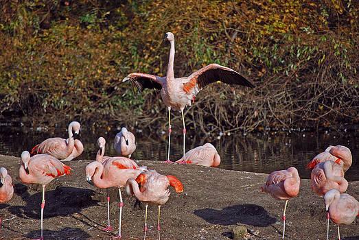 Michelle Cruz - Flamingo Showing Off