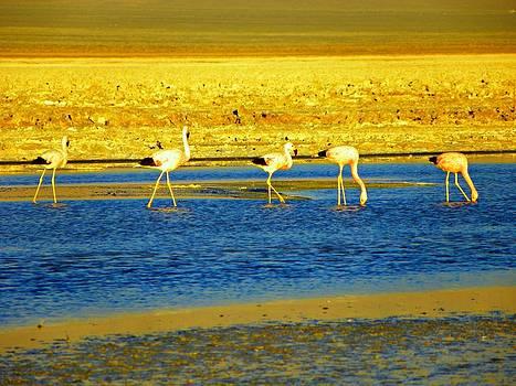 Flamingos at Atacama Desert by Sandra Lira