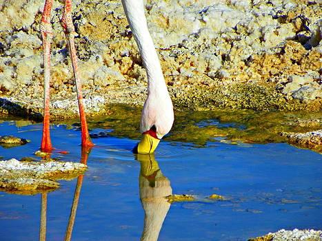 Flamingos in the Atacama Desert by Sandra Lira