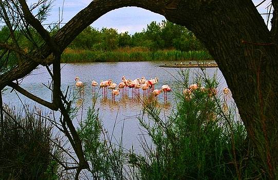 Flamingos in the Camargue by Christine Burdine
