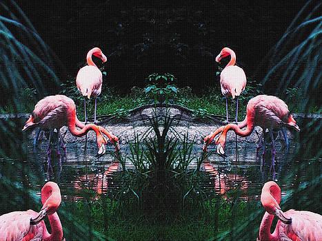 Flamingos by Jesus Nicolas Castanon