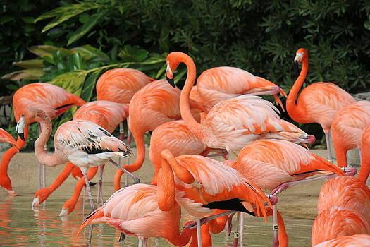 Flamingos2 by Shweta Singh
