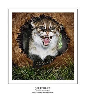 FLAT HEADED CAT Prionailurus planiceps by Owen Bell