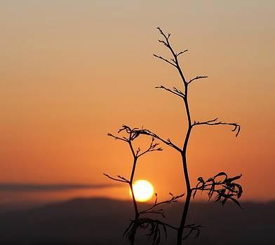 Flax At Sunrise by Judy Watson