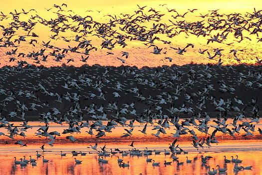 Flight on the Pond  by Glenn Lawrence