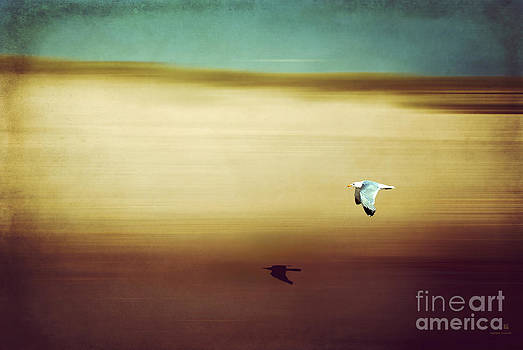 Hannes Cmarits - flight over the beach