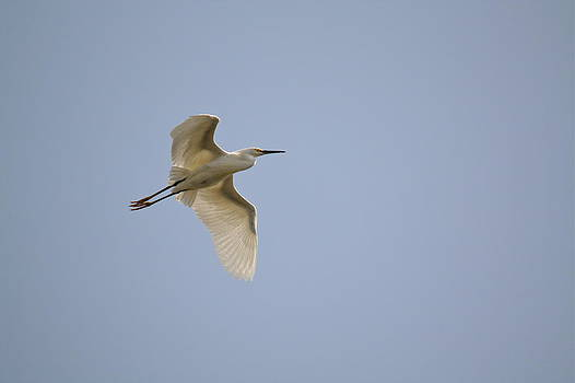 Flight Practice by Diana Hatcher