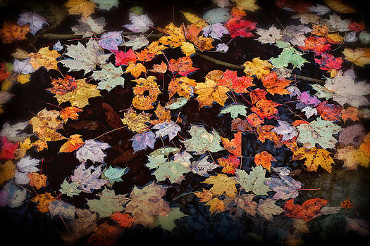 Floating Fall Leaves 3648  by Ken Brodeur