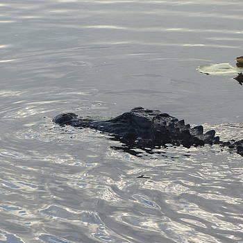 Cathy Lindsey - Floating Gator