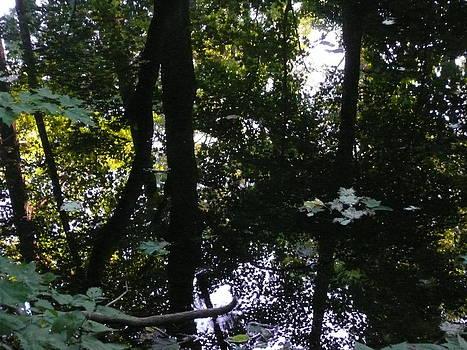 Angela Hansen - floating leaves