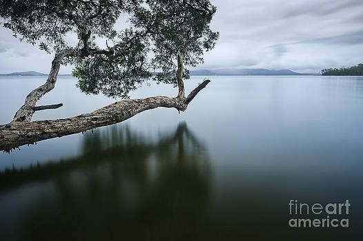 Floating Limb by Michael Howard