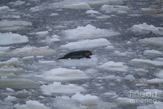 Floating Seal by Dean Gribble
