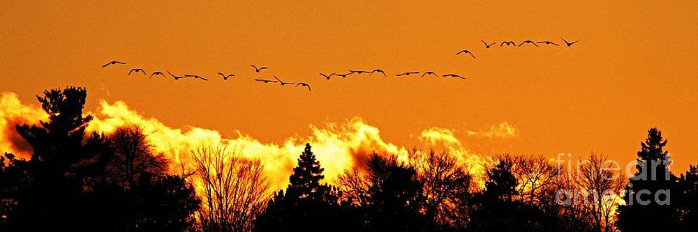 Larry Ricker - Flock of Geese at Sunset - 2