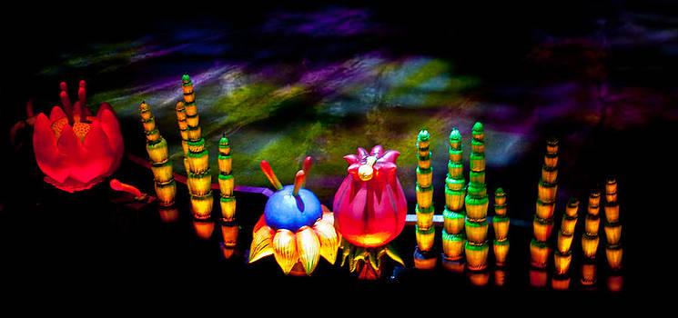 Flora de Loco by Erik Hovind