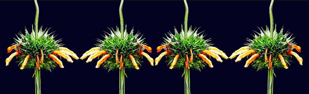 Floral 2 by Jesus Nicolas Castanon
