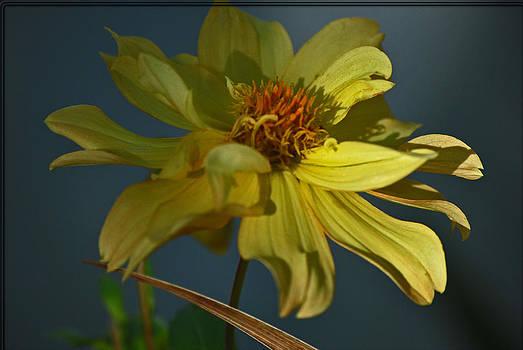 Michelle Cruz - Floral Attraction