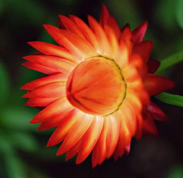 Michelle Cruz - Floral Blast