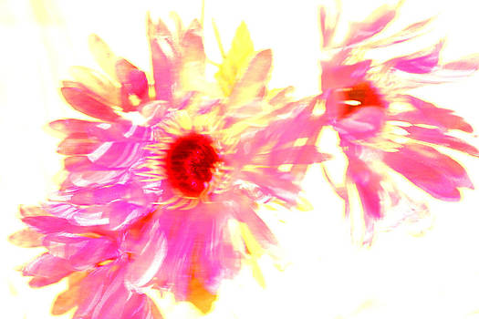 Floral Burst by Mickey Hatt