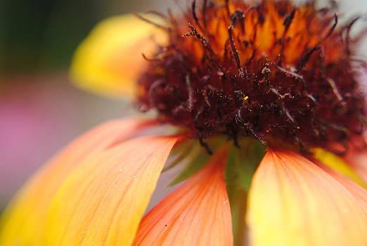 Floral Detail by Stephanie Thomson
